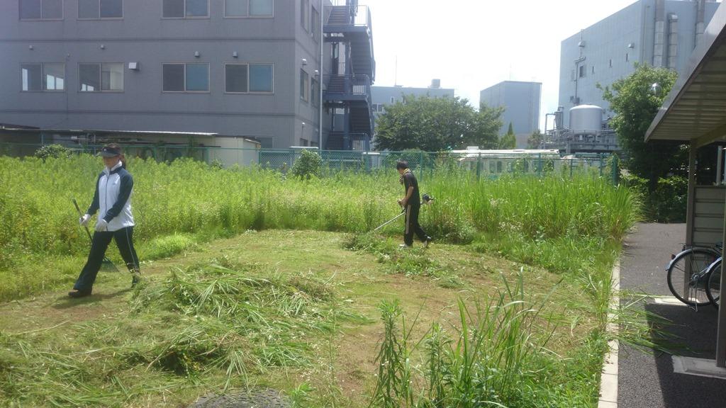 草刈り_2